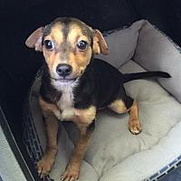 Adopt A Pet :: Gordon - Del Rio, TX