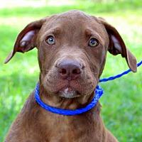 Adopt A Pet :: Kernel - Southbury, CT
