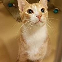 Adopt A Pet :: Manderin - McKinney, TX