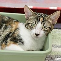 Adopt A Pet :: Beatrice - Westchester, CA