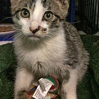Adopt A Pet :: Dixon - East Brunswick, NJ