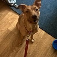 Adopt A Pet :: Karee (car-ee) - Ogden, UT
