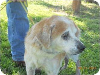 Terrier (Unknown Type, Small) Mix Dog for adoption in Olney, Illinois - Gloria