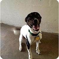 Adopt A Pet :: Charlie - Winter Haven, FL