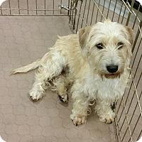 Adopt A Pet :: Jared - Phoenix, AZ