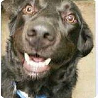 Adopt A Pet :: BamBam - Alliance, NE