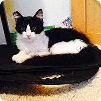 Adopt A Pet :: Mickey - Modesto, CA