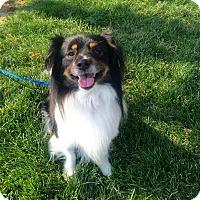Adopt A Pet :: Oscar - Meridian, ID