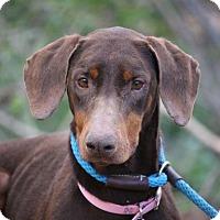 Adopt A Pet :: Cadence - Fillmore, CA