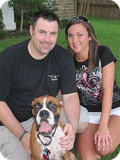 Boxer Dog for adoption in Houston, Texas - CARMELA