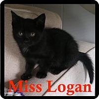 Adopt A Pet :: Logan - Great Mills, MD
