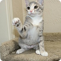 Adopt A Pet :: Jessica Jones - Edmond, OK