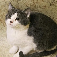 Adopt A Pet :: Tickle - McDonough, GA