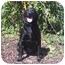 Photo 3 - Labrador Retriever Mix Dog for adoption in Austin, Minnesota - Libby