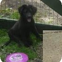 Adopt A Pet :: Cassie - Antioch, IL