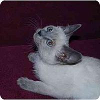 Adopt A Pet :: Charm - Modesto, CA