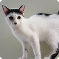 Adopt A Pet :: Binky - Cleveland, OH