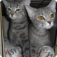Adopt A Pet :: Sierra and Teth - Dallas, TX