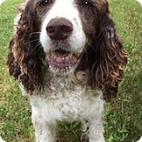 Adopt A Pet :: Tootsie - Minneapolis, MN