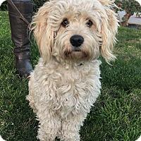Adopt A Pet :: Truman - Van Nuys, CA