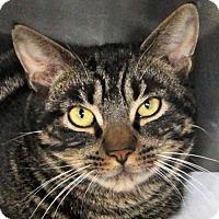 Adopt A Pet :: Ulysses - Stanhope, NJ