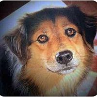 Adopt A Pet :: TASHA - Concord, NC