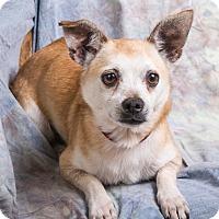 Adopt A Pet :: MAX - Anna, IL