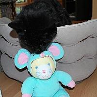 Adopt A Pet :: Jenny - Prescott, AZ