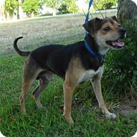 Adopt A Pet :: Buster - Bedminster, NJ