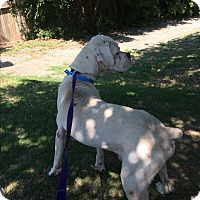 Adopt A Pet :: Toobin - Austin, TX