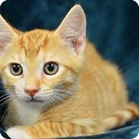 Adopt A Pet :: Admiral     171189 - Atlanta, GA