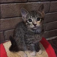 Adopt A Pet :: Strawberry - Phoenix, AZ