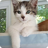 Adopt A Pet :: Alani - Waldorf, MD