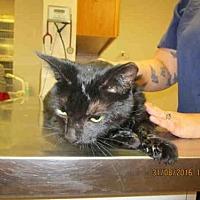 Adopt A Pet :: LUCY - Lacombe, LA