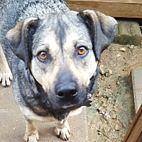 Adopt A Pet :: Macy - Byhalia, MS