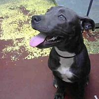 Adopt A Pet :: BROOKLYN - Atlanta, GA