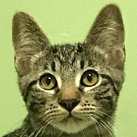 Adopt A Pet :: Honor - Auburn, CA