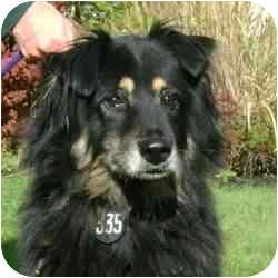 Collie/Shepherd (Unknown Type) Mix Dog for adoption in Berea, Ohio - Bootsie