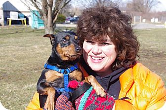 Miniature Pinscher Dog for adoption in Elyria, Ohio - Harley