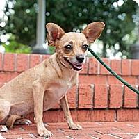 Adopt A Pet :: Spark - Houston, TX