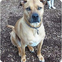 Adopt A Pet :: Tucker - in Maine! - kennebunkport, ME