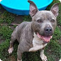 Adopt A Pet :: Tinker - Fayette City, PA