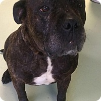Adopt A Pet :: JUICY - Oswego, IL