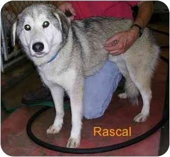 Husky Mix Dog for adoption in Bloomsburg, Pennsylvania - Rascal