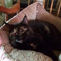 Adopt A Pet :: Audrey - Rochester, NY