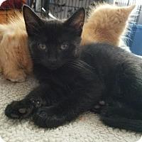 Adopt A Pet :: Anna - Barrington, NJ