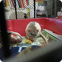 Adopt A Pet :: Mix of boys and girls - Philadelphia, PA