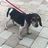 Adopt A Pet :: Roberta - Tampa, FL