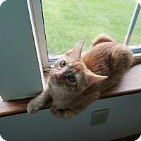 Adopt A Pet :: Jim Bob - Duluth, GA