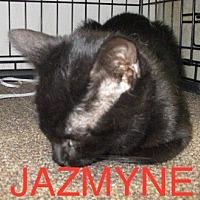 Adopt A Pet :: JAZMYNE - detroit, MI